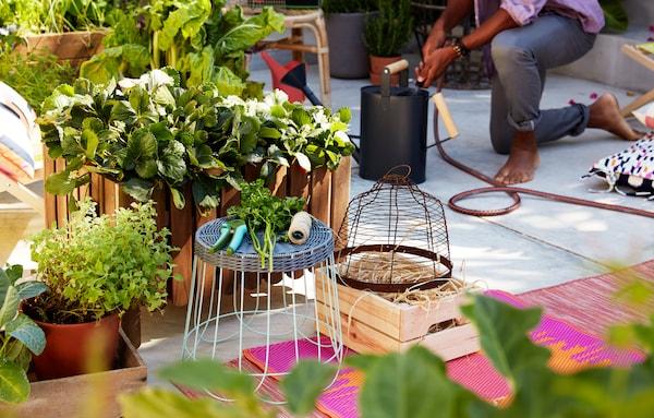 コンクリートに置いた植物を植えた大きな木箱、そのまわりのラグ、スツール、園芸用具。