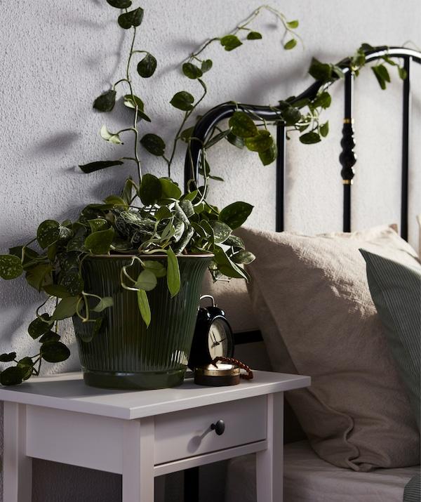 Krevet obasjan suncem i uzglavlje s crnim cevima i puzajućom vrbom iz saksije na noćnom stočiću.