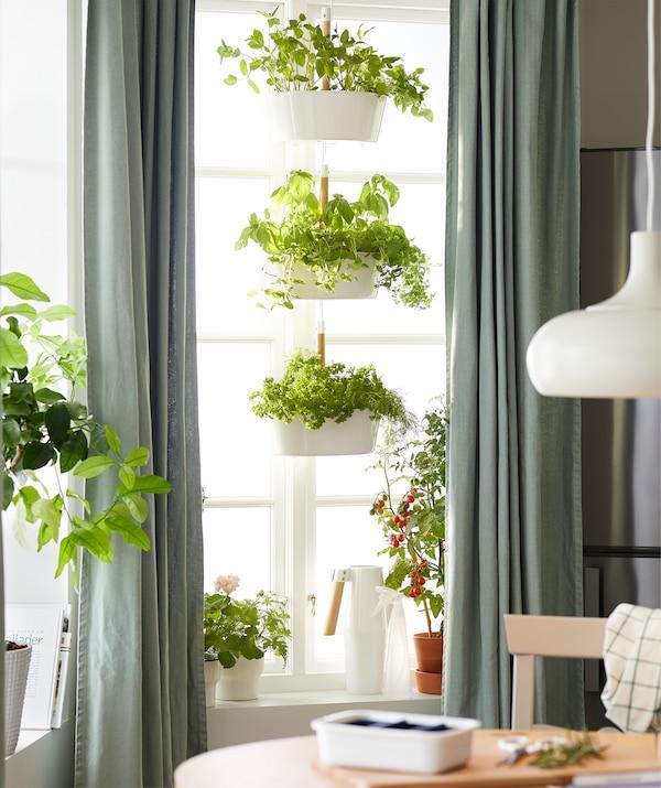 Kuchyňa s veľkými oknami s jedlými rastlinami na parapete a trojposchodovom závesnom držiaku na rastliny.