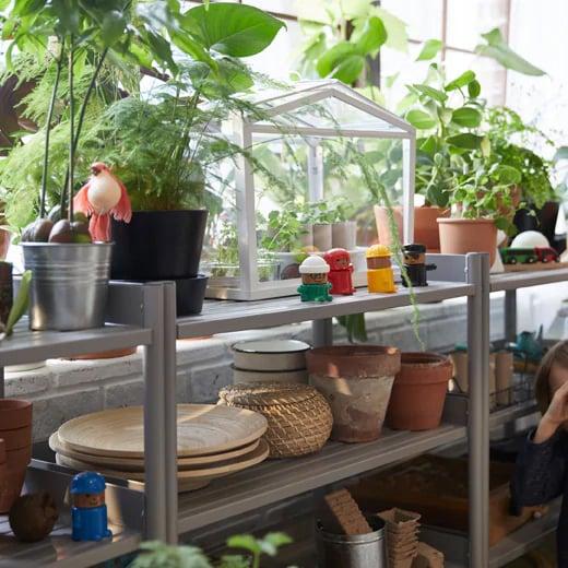 La miniserre SOCKER trouve sa place sur une étagère installée devant la fenêtre. Les étagères regorgent de plantes, de pots et d'articles de jardinage.