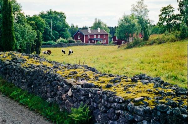 La primera sede de IKEA se encuentra en Småland, en medio de un hermoso paisaje con bosques, prados y lagos. Se ubica al sur de Suecia y aquí es donde comienza IKEA. Los inicios de la empresa.