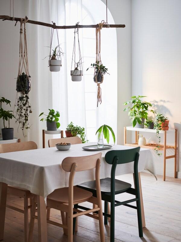 Lakásbelső asztallal és székekkel, kisasztal a fal mellett. Zöld növények a felületeken, néhány pedig az asztal felett lóg.
