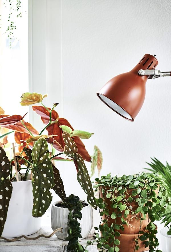 Lampe couleur rouille et cache-pots.
