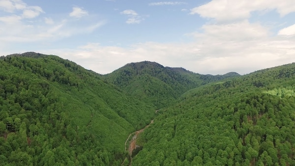 Landscape aerial view image of green forest