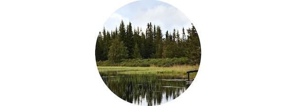 Las odbijający się w górskim jeziorze.