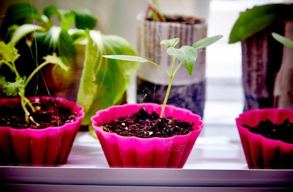 Leivosvuoat sopivatmyös taimien kasvatukseen.
