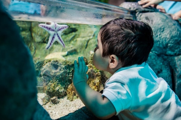 little boy pressing his face against fish tank glass with a starfish