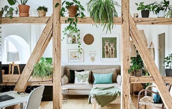 Living room with beige sofa and green cushions by a wall of pictures, A-frame timber beams and plants separate off workspace.