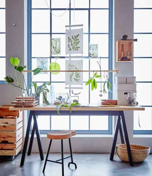 Long wooden table with black legs in front of a bright window with botanical themed pictures on it.