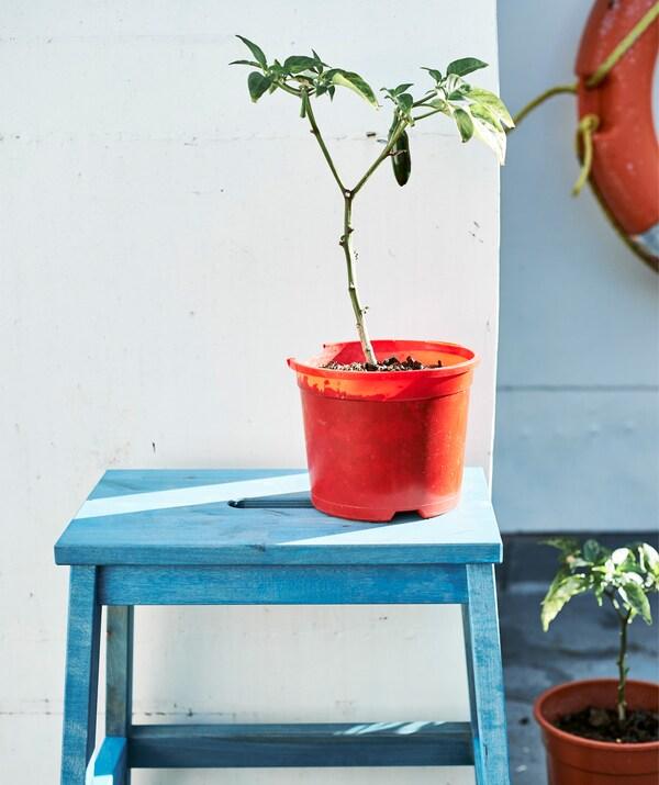 Los beneficios de la jardinería.