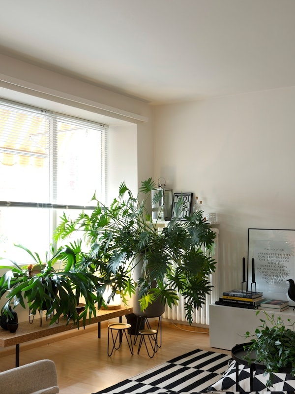 Lots of green IKEA plants create a feeling of freshness at home.