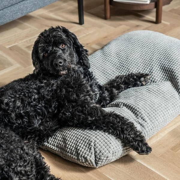 Lurvig svart hund ligger på grå kudde från serien LURVIG.