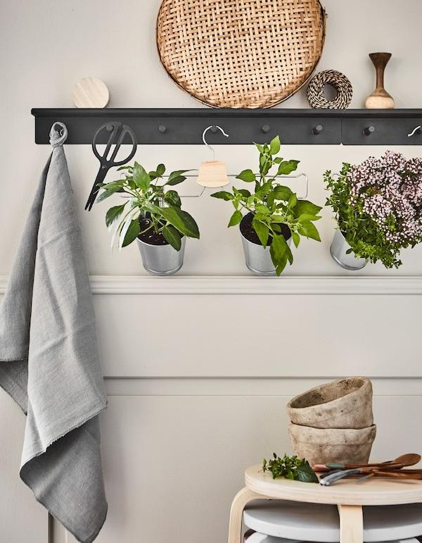 Macetas con plantas sujetas con pinzas a una percha para pantalones colgada en un perchero de pared negro.