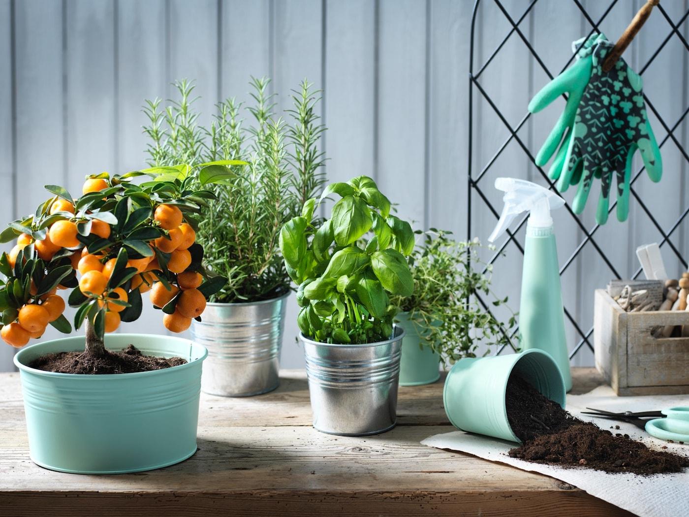 Macetas con plantas y material de jardinería sobre una mesa