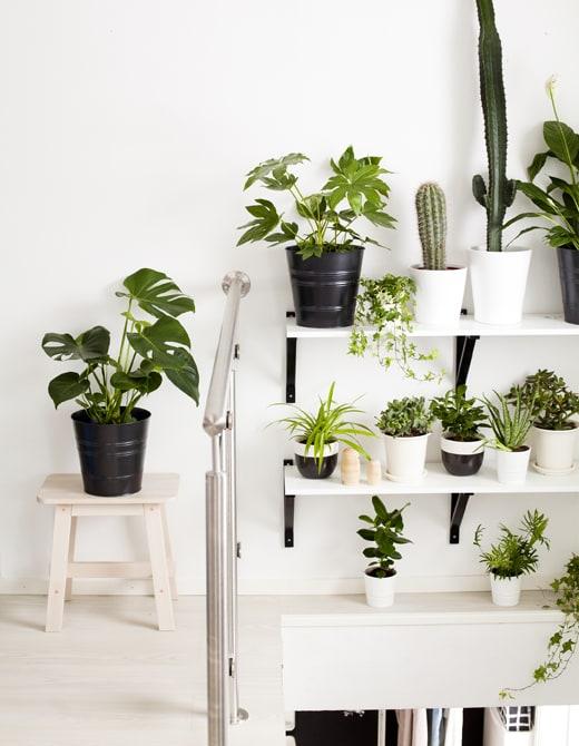 5 idee facili per decorare la casa con le piante ikea for Idee per arredare casa con poco
