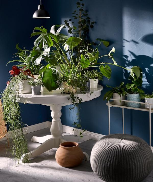Mesa redonda pequeña con una sola pata girada, en un rincón, con la parte superior completamente cubierta de plantas en macetas.