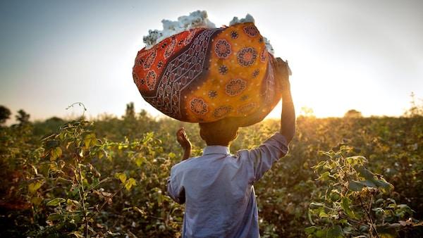 Mężczyzna stojący na polu bawełny z koszem bawełny na głowie