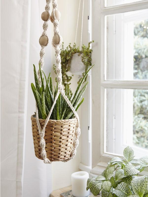 Mit Macramé Zimmerpflanzen glänzen lassen, u. a. mit SOCKERÄRT Vase in Weiß