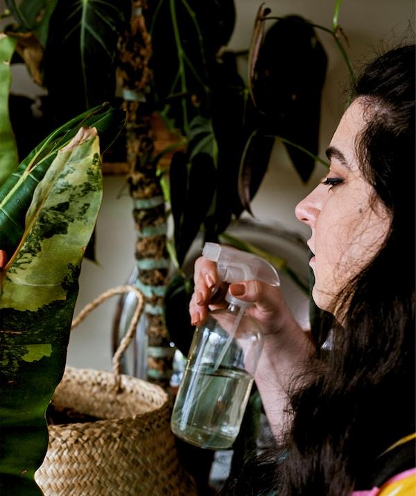 Młoda kobieta podlewa roślinę spryskiwaczem.