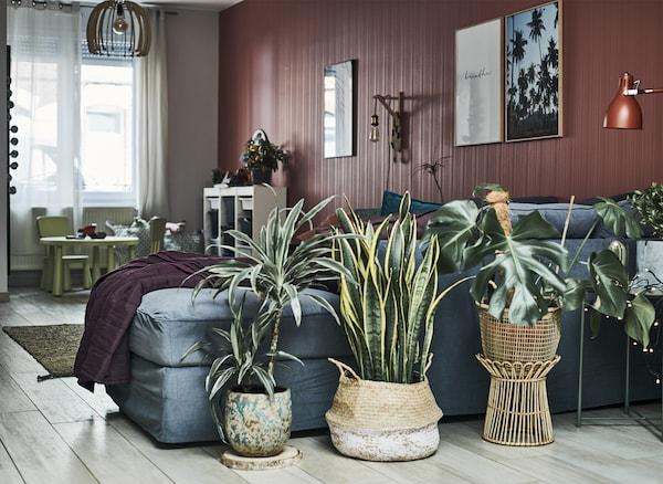 منطقة غرفة جلوس مع كنبة رمادية، آنية نباتات وحائط أحمر.