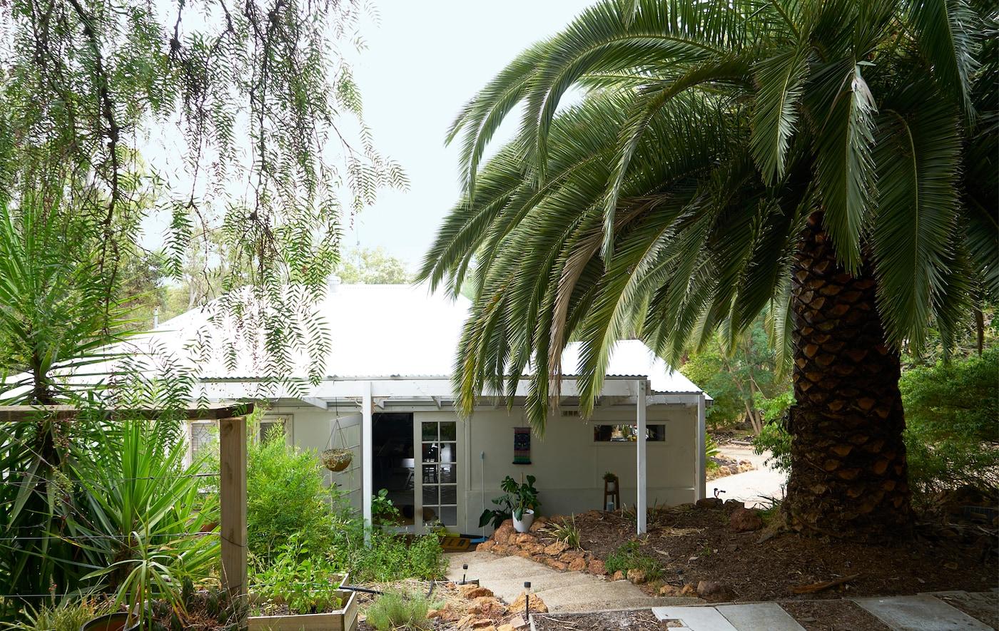 منزل أبيض من طابق واحد بين الغابات، مع نخلة عملاقة.