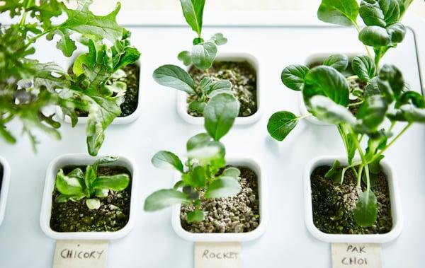Modulo de cultivo