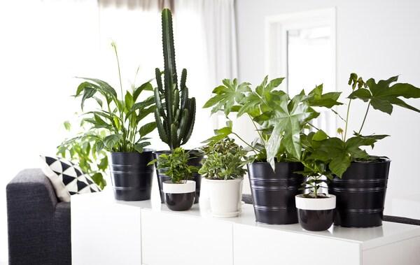 Монохромный интерьер с белым сервантом, украшенным зелеными растениями в горшках.