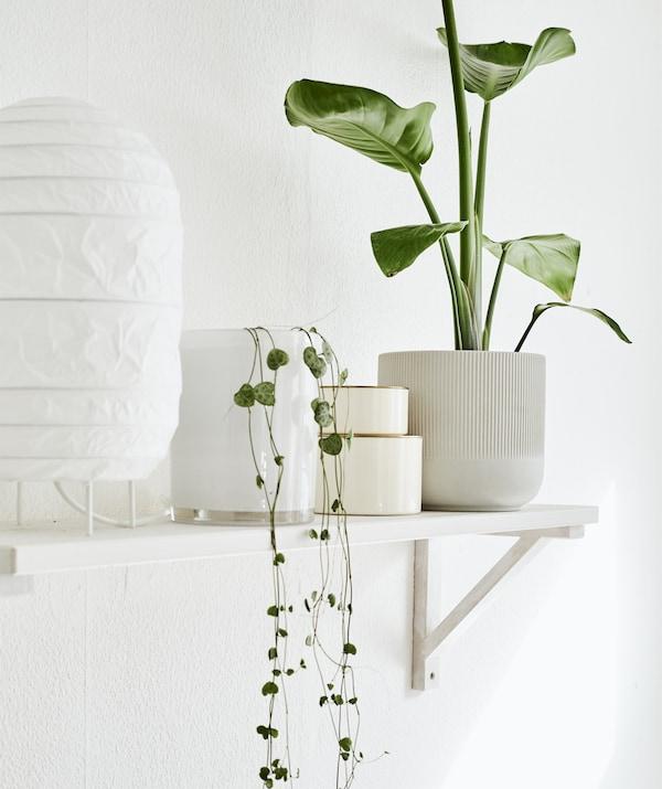 مصباح أبيض، وأواني نباتات وقطع زينة على رف أبيض معلق على الحائط.