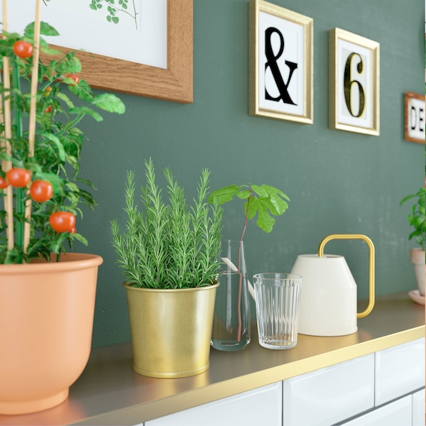 مطبخ أخضر مع طماطم وأعشاب في أواني النباتات بلون أحمر-بني وذهبي مع ابريق سقي بلون ذهبي/ عاجي.