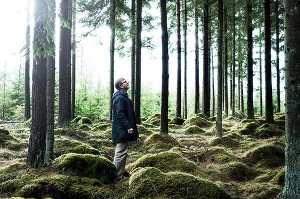 Muž stojí mezi stromy na farmě stromů. Země je pokryta mechem. Dívá se nahoru.