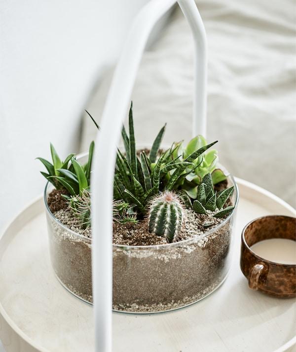 مزهرية شفافة أسطوانية تحتوي على النباتات العصارية والصبار على طاولة جانبية من الخشب الفاتح.