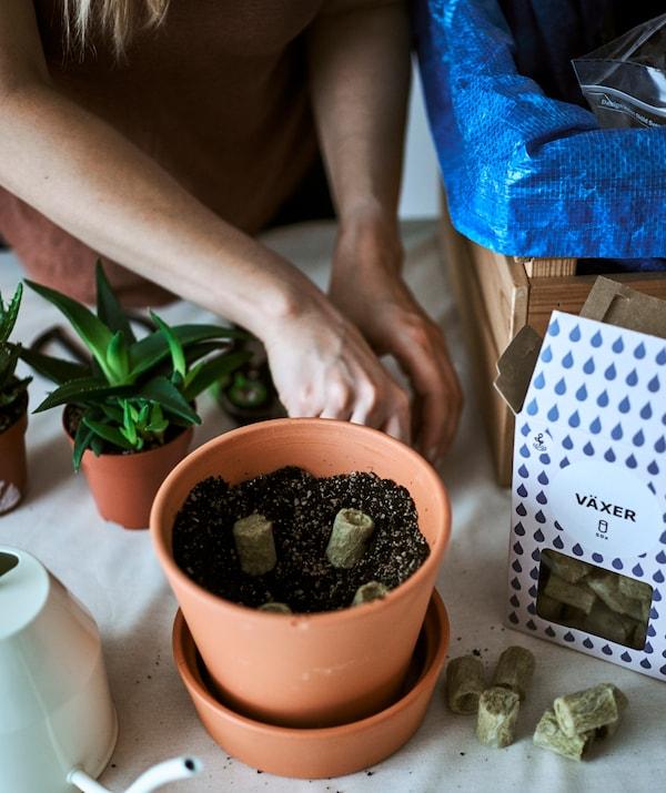 نبات تيراكوتا في إناءنصف مملوء بالتربة، وحصى وشتلات، مع إبريق سقي ونبات عصاري سوف يتم نقله في إناءجديد.