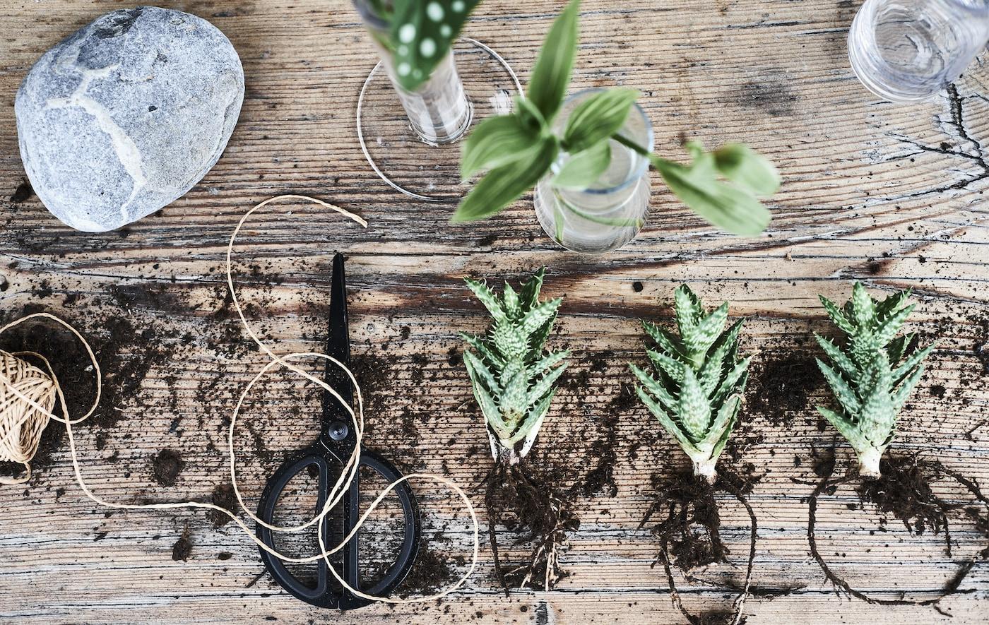 نباتات وتربة وخيط ومقص على مقعد خشبي.