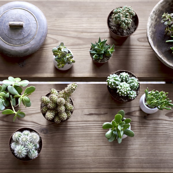 Nine potted miniature succulents on a wooden table.