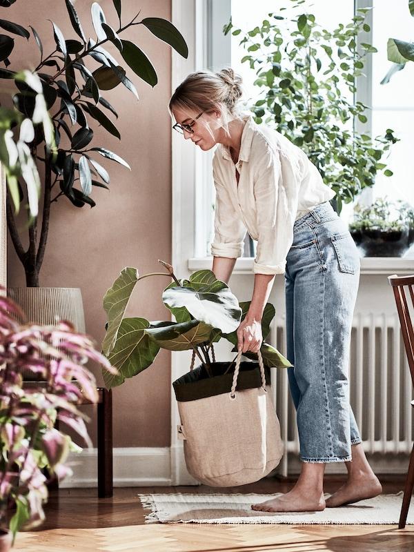 都会の女性ガーデナーが、大きな植物をガーデニング用バッグに入れて運んでいます。場所はリビングルーム。