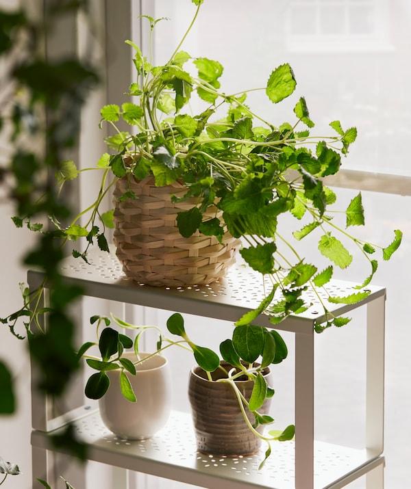 光の差し込む窓台に置いたスリムなVARIERA/ヴァリエラ 小型シェルフに、葉の多い植物を植えた小さな植木鉢をいくつか置いて。