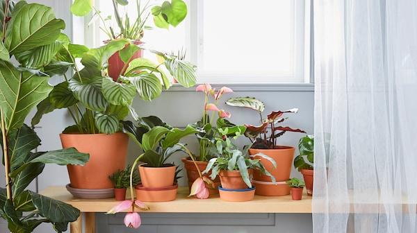 نصائح لتجعل نباتاتك الداخلية تزدهر.