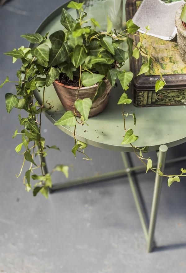 O masă de servit cu plante și accesorii decorative.