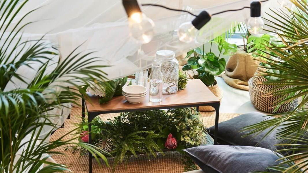 Ob im Garten, in der Wohnung oder im beruflichen Alltag – für Kasia muss es grün sein!
