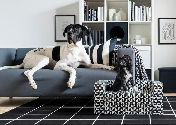 Obývací pokoj s pohovkou KLIPPAN, na které leží velká dánská doga. Na malé pohovce LURVIG leží menší pes.