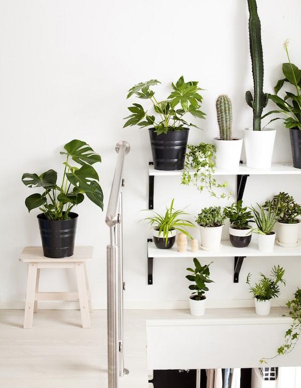 Pared blanca y estantes decorados con plantas en maceteros de distintos tamaños.