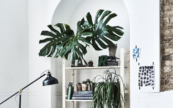 Parete bianca con scaffali e piante artificiali - IKEA