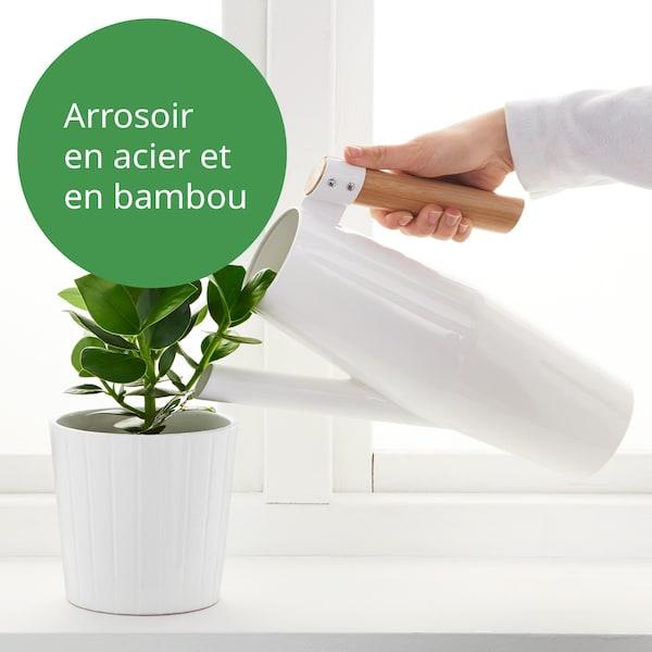 personne qui à l'aide d'un arrosoir, arrose une plante