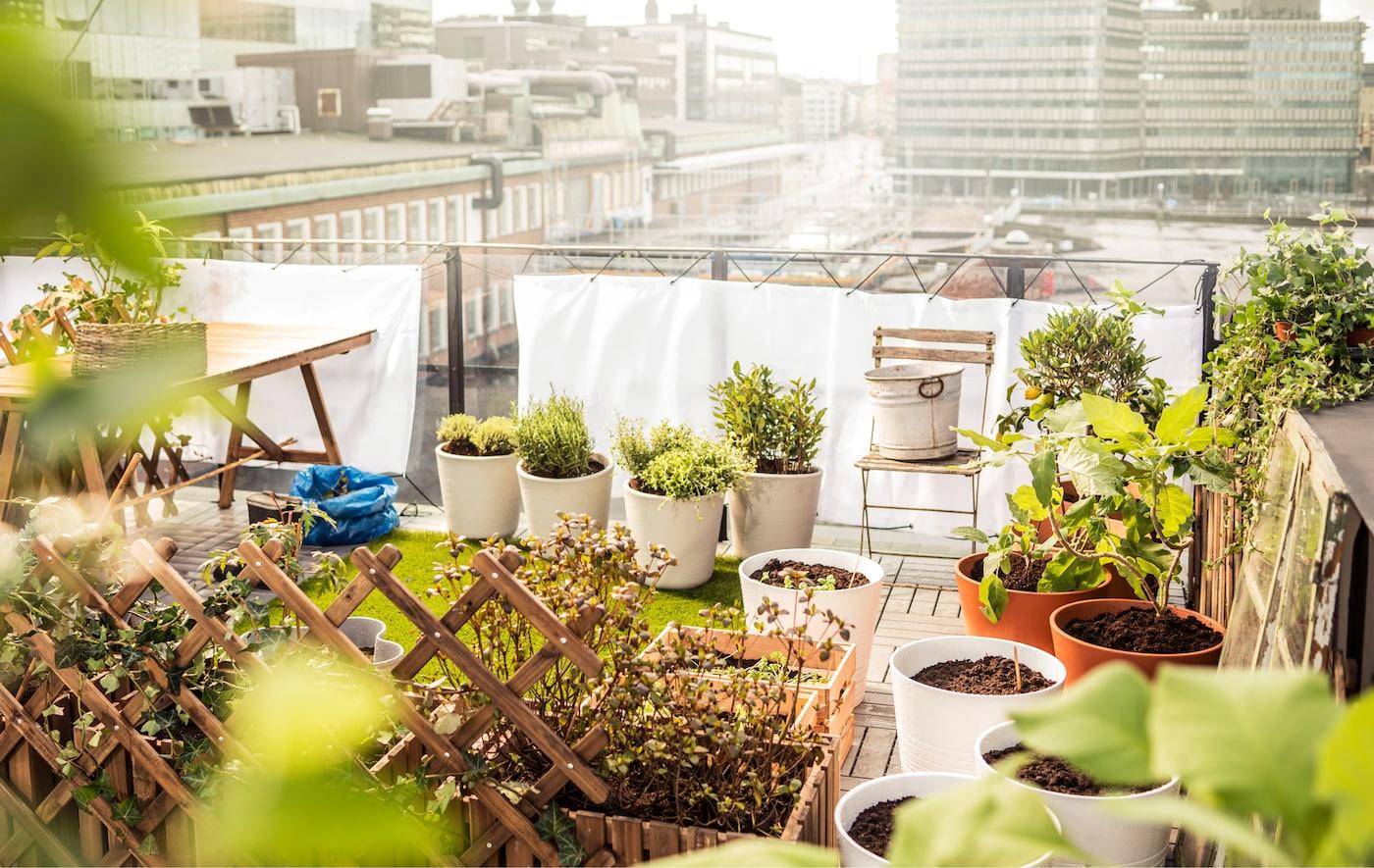 Petit jardin aménagé sur un toit, avec carré d'herbe
