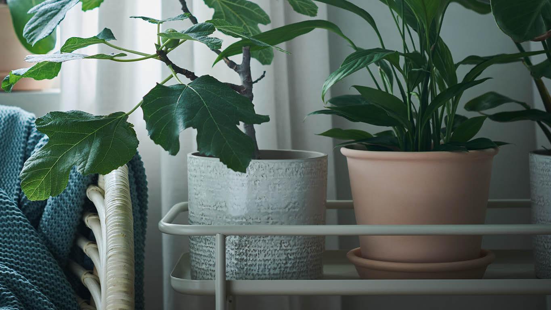 Pflanzen in dekorativen Übertöpfen auf einem Blumenständer