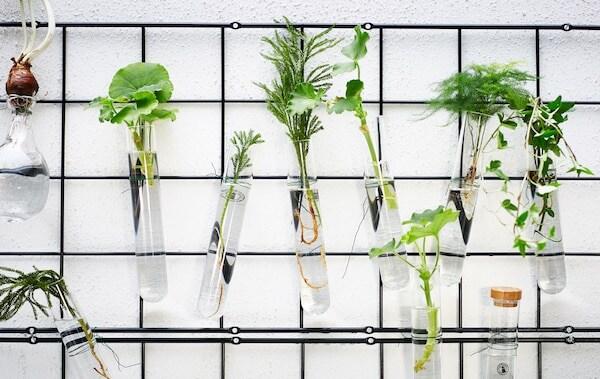 Pflanzen in Glasbehältern an einem Gitter befestigt