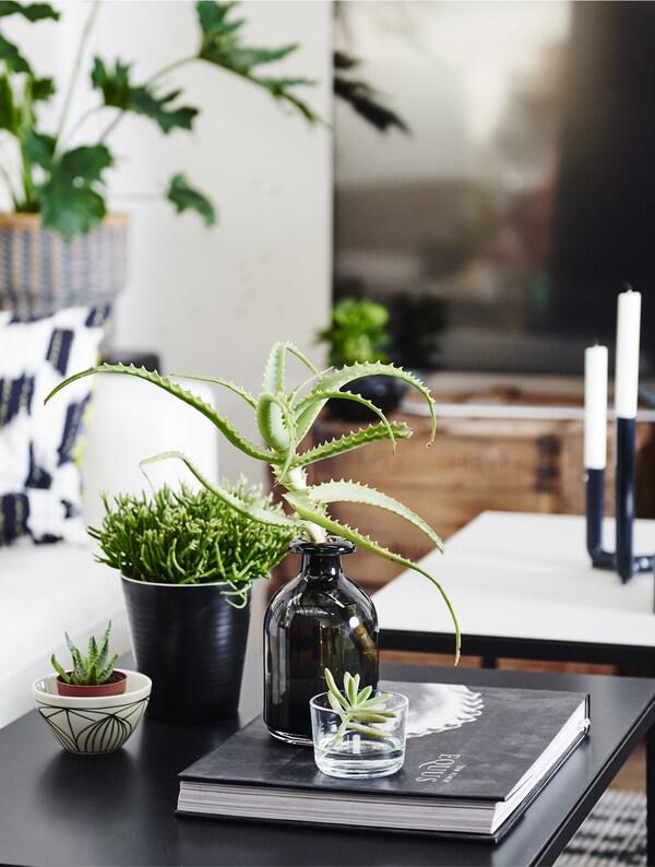 Einrichtungsideen mit pflanzen ikea for Ikea kunstliche pflanzen