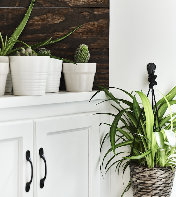 Pflanzen in weißen Übertöpfen auf einem weißen Schrank, u. a. mit DRUVFLÄDER Ampel Wasserhyazinthe/grau.