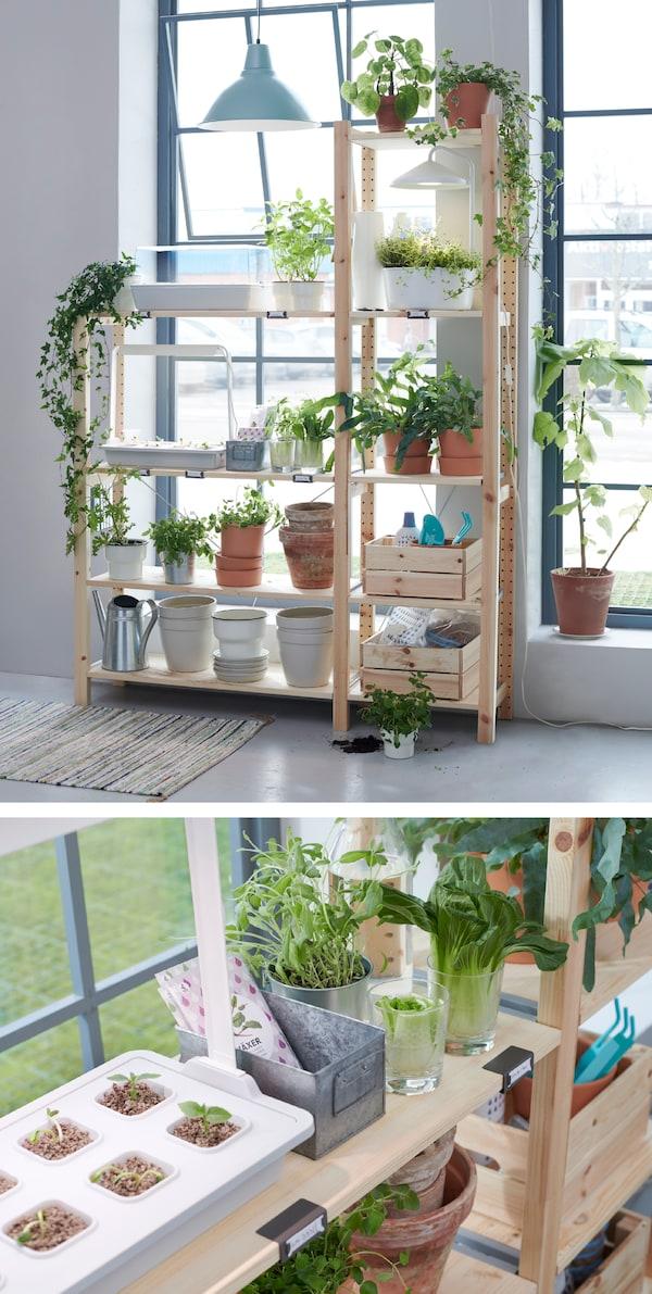 Pflanzen lassen sich wunderbar in Wasser ziehen. Dafür brauchst du lediglich Wasser, Samen und ein Anbau-Set. Bis du die ersten Pflänzchen siehst, bleiben sie in einer Anzuchtbox mit Deckel wie IKEA VÄXER inklusive Beleuchtung.
