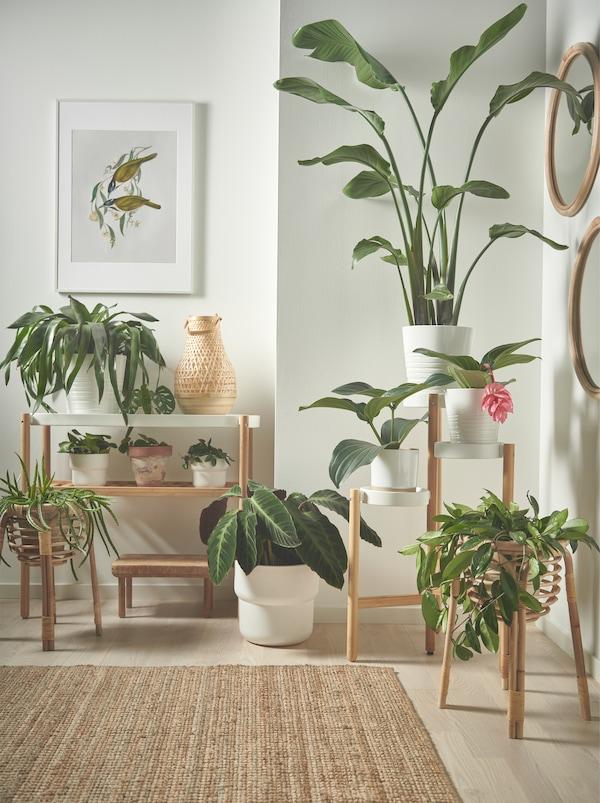 Piante di varie dimensioni appoggiate sul pavimento e su piedistalli per piante SATSUMAS bianchi e in legno ad altezze diverse.